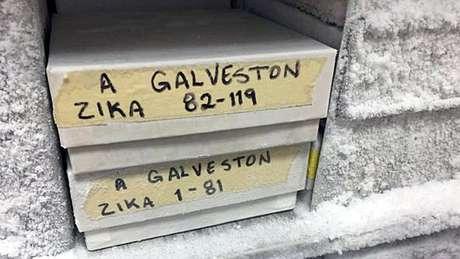 Amostras do zika coletadas no Brasil estão em um laboratório de alta segurança em Galveston, no Texas