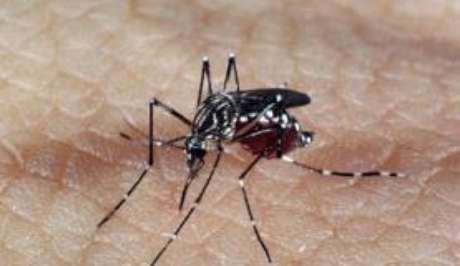 Especialistas de vários países estudam roteiro para controle do Mosquito Aedes aegypti