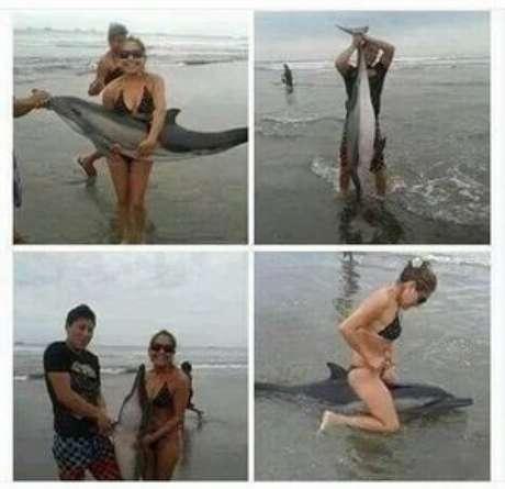 Excesso de selfies mata filhote de golfinho