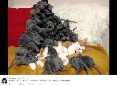 Este usuário do Twitter fez uma brincadeira com um gato: acordou-o depois de cercá-lo de ratos de brinquedo