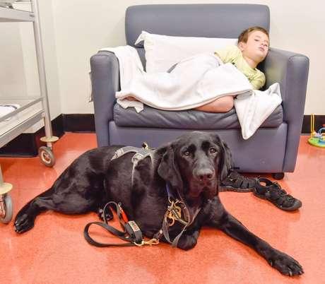 Labrador Mahe acompanhou James durante ressonância magnética em hospital