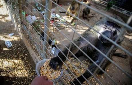 Animais de zoo de Gaza recebem doações