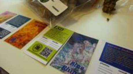 O clube produz dez variedades diferentes de maconha