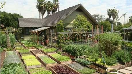 """Jules destaca que sua horta não foi trabalho de um dia para o outro: """"É preciso seguir em frente"""""""