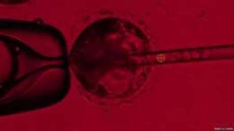 Células-tronco humanas são injetadas em embriões de porco - as células podem ser vistas no tubo à direita