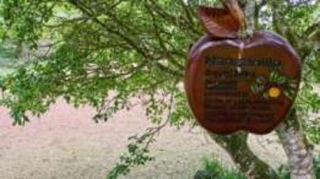 """Placa alerta sobre perigo: """"É uma das árvores mais perigosas do mundo""""."""
