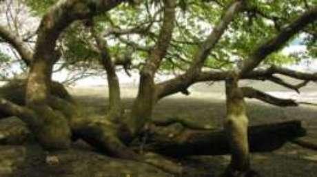 Sombra da árvore pode te convidar para um descanso, mas ficar embaixo dela é perigoso