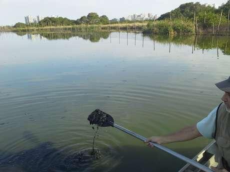 Dois rios continuam despejando diariamente uma quantidade enorme de esgoto e detritos na lagoa do Jacarepaguá.