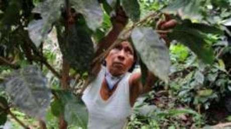 O cultivo do café é o que sustenta Irene Guasiruma e seus vizinhos.