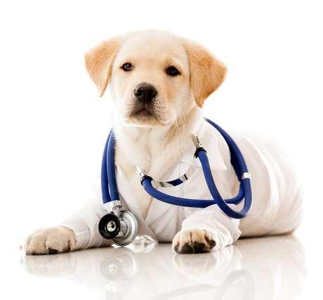 Se o cachorro tiver alguma doença, como a Giárdia, ela pode ser transmitida pela saliva sim