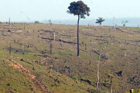 Meta do Brasil na agricultura é restaurar e reflorestar uma área de 12 milhões de hectares