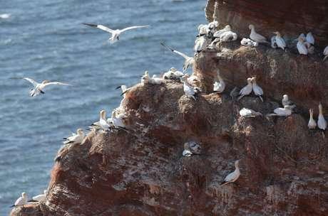Helgoland  é um popular destino turístico conhecido por sua abundante vida selvagem