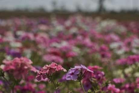 Primavera começou na quinta-feira e vai até o dia 21 de dezembro
