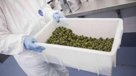 A Agência Nacional de Vigilância Sanitária (Anvisa) concedeu pela primeira vez o registro a um medicamento à base de cannabis sativa, a maconha, no País.