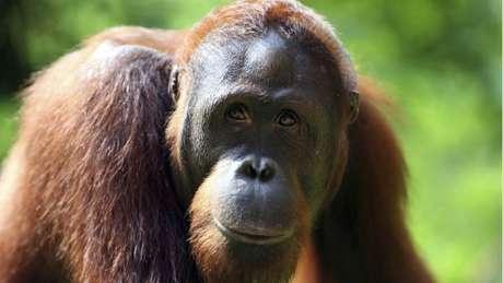 Nova base de dados sugere que 1.800 macacos foram apreendidos em dez anos