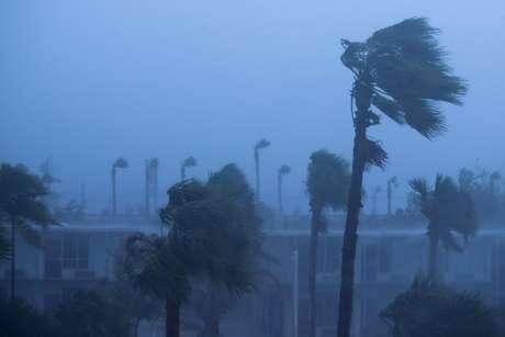 Palmeiras em Ormond Beach mostram a força dos ventos causados pelo furacão Matthew