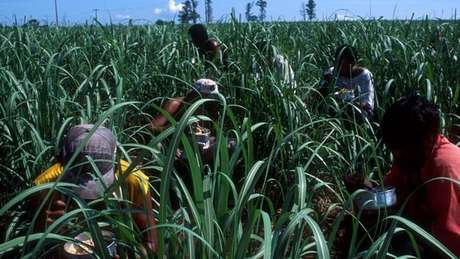 Fazendeiros deveriam reservar terras para a produção de alimentos ou para a produção de biocombustíveis?