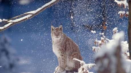 Relatório traz uma radiografia da vida animal no planeta e alerta para a redução dramática da biodiversidade