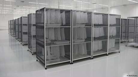 Mosquitos machos são armazenados em prateleiras, numa espécie de sala de estoque