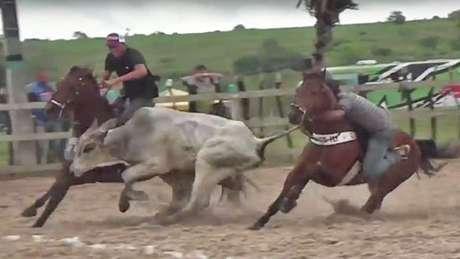 """Laudo da Universidade Federal de Campina Grande (PB) apontou """"lesões e danos irreparáveis"""" em bois e cavalos como resultado de vaquejadas"""