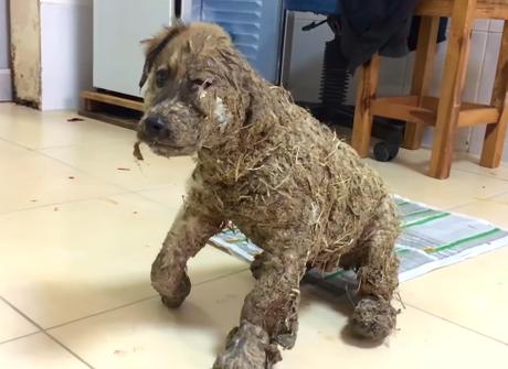 Perro fue cubierto de pegamento hasta quedar inmovil — Indignante