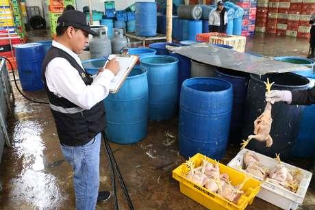 La Victoria: decomisan 300 pollos que eran inflados con la boca