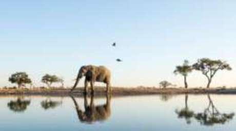 Elefantes estão entre os animais que reconhecem seu próprio reflexo