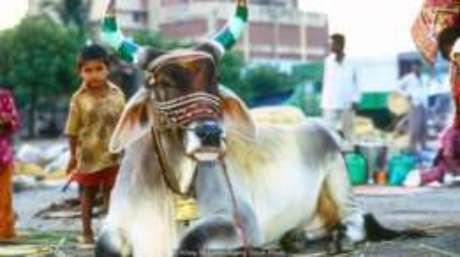 Mais de 20 Estados na Índia proíbem o abate de vacas, o consumo desse tipo de carne ou ambos