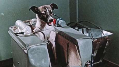 A cadela Laika viajou para o espaço