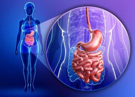 El nuevo órgano conecta el intestino con el abdomen