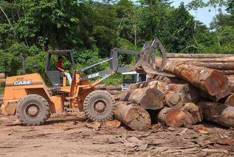 Desmatamento de 2016 na Amazônia é o maior desde 2008, segundo levantamento do Ipam