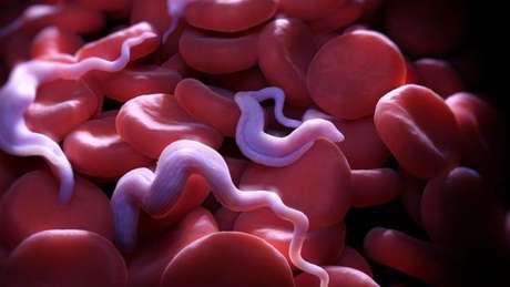 Além do sangue, parasitas também ficam na pele e na gordura do corpo