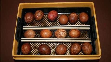 Em 2010, Lendrum foi detido na Inglaterra por tentar embarcar com ovos de falcão peregrino como os acima
