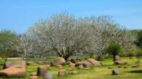 O Parque da Unidade é um dos locais que reúne exemplares do um milhão de árvores plantadas pelos moradores