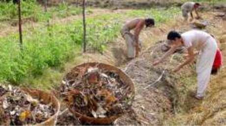 Existem em Auroville mais de uma dezena de fazendas de diferentes tamanhos, onde não só é possível semear, mas aprender a cultivar a terra