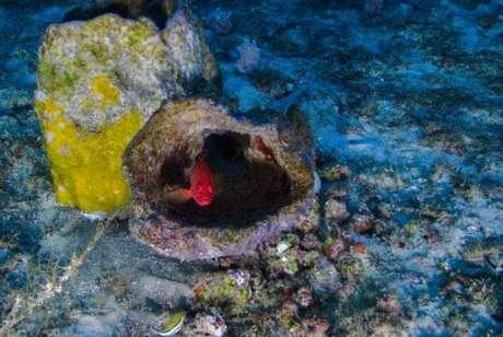 O recife de corais, esponjas e rodolitos tem 9,5 mil quilômetros quadrados