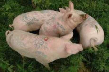 Colecionadores podem comprar peles de porcos tatuados por Wim Delvoye tão logo eles morram