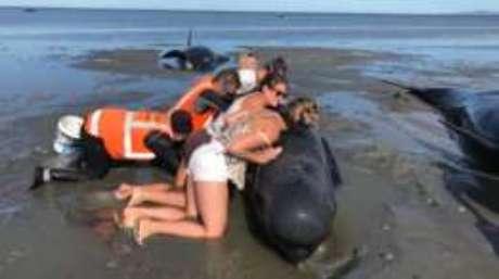 Antes de levá-las, ele precisam perfurar as baleias para impedir o acúmulo de gás.