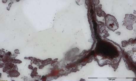 Descobertos microorganismos fósseis que podem ter 4 bilhões de anos
