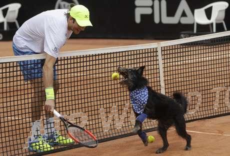 Perros abandonados son los recogepelotas en el Abierto de Tenis en Brasil