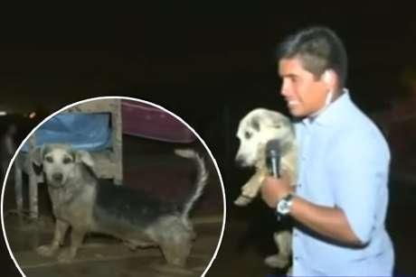 Reportero salvó a perrito tras desborde del río Huaycoloro.