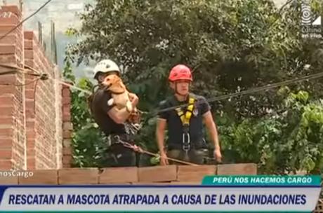 Mascota es rescatada tras quedar atrapada en techo.