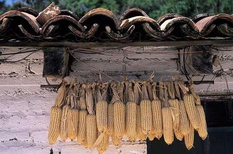 """Combinado ao milho """"normal"""", o huitlacoche oferece os nove aminoácidos essenciais que o organismo não produz"""