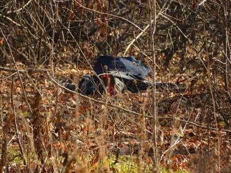 La policía encontró el cuerpo de la víctima en un parque cercano a la ciudad.