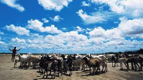 A retirada da vegetação para acomodar o pastoreio afetou a ecologia e reduziu a frequência de chuvas na região
