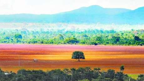 O Cerrado tem hoje cerca de 13 mil tipos de plantas, número que o torna um dos biomas mais ricos do mundo
