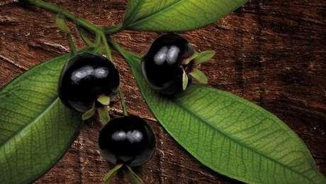 Atala defende o uso de ingredientes brasileiros, como a grumixama - considerado em extinção
