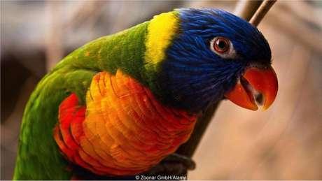 Papagaios são espécies com capacidade de aprendizado vocal