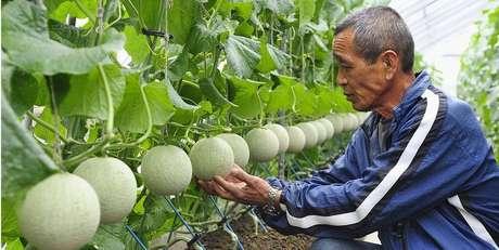 Durante séculos, japoneses aperfeiçoaram a forma de produzir frutas e carnes