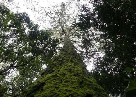 Pesquisa mostrou que mais da metade das espécies de árvores são encontradas em um único país